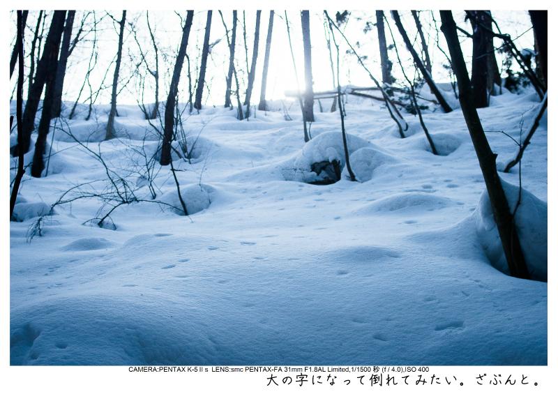 snowmonkey jigokudani20.jpg