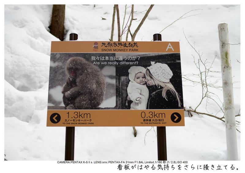 snowmonkey jigokudani22.jpg