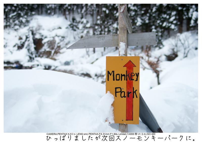 snowmonkey jigokudani28.jpg
