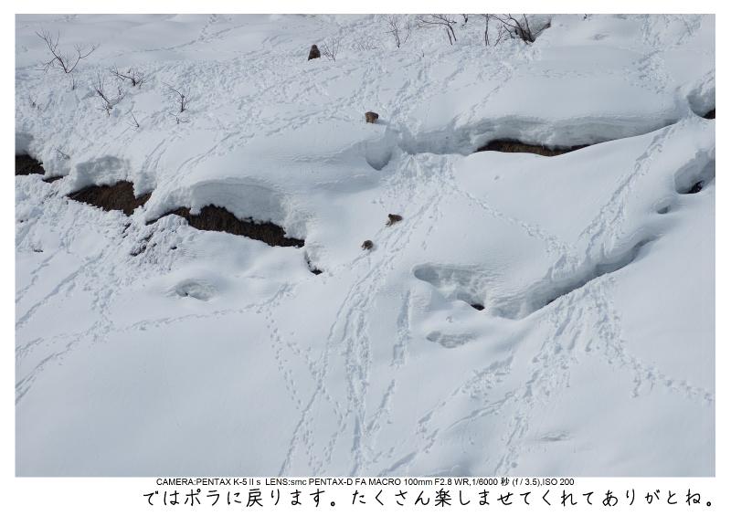 snowmonkey jigokudani64.jpg