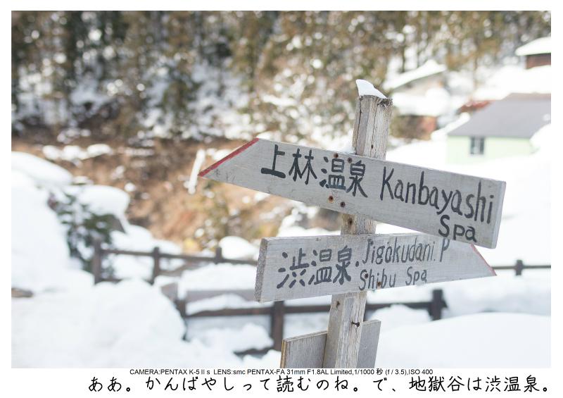 snowmonkey jigokudani67.jpg