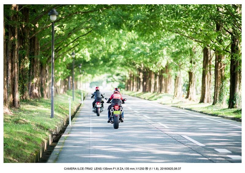 20160925滋賀県・メタセコイヤ並木道2.jpg