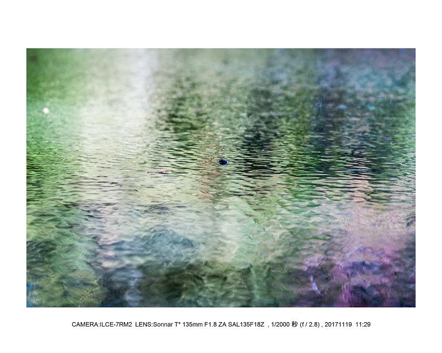 201711大阪長居植物園もみじ紅葉見頃満開オールドレンズスナップ9.jpg