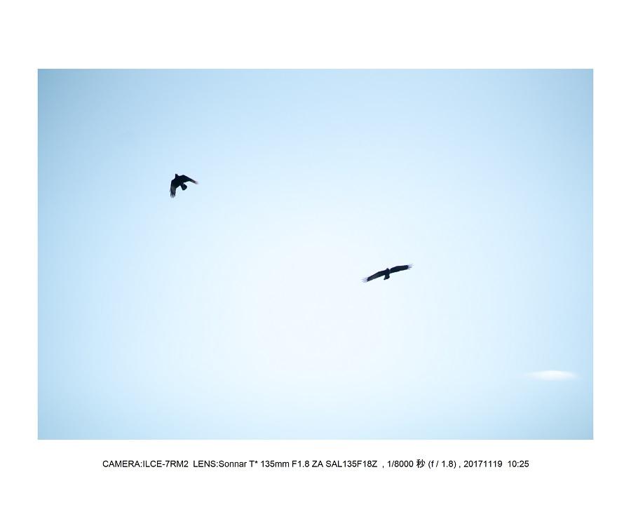 201711大阪長居植物園オールドレンズスナップ(SuperTakumar50mmF1.4)12.jpg