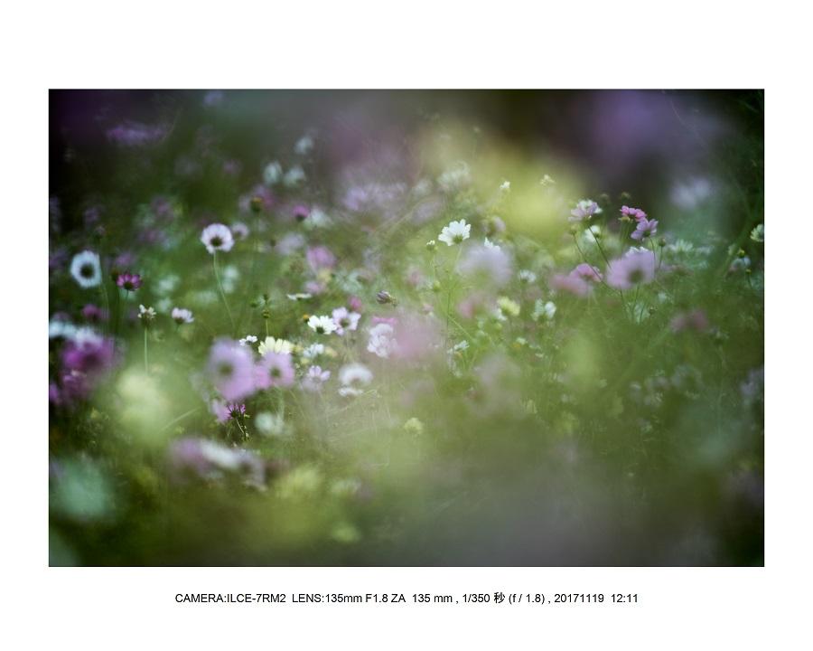 201711大阪長居植物園オールドレンズスナップ(SuperTakumar50mmF1.4)4.jpg