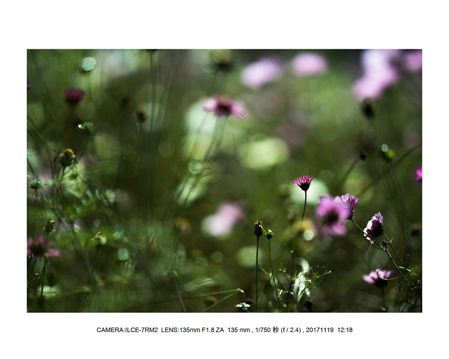 201711大阪長居植物園オールドレンズスナップ(SuperTakumar50mmF1.4)5.jpg
