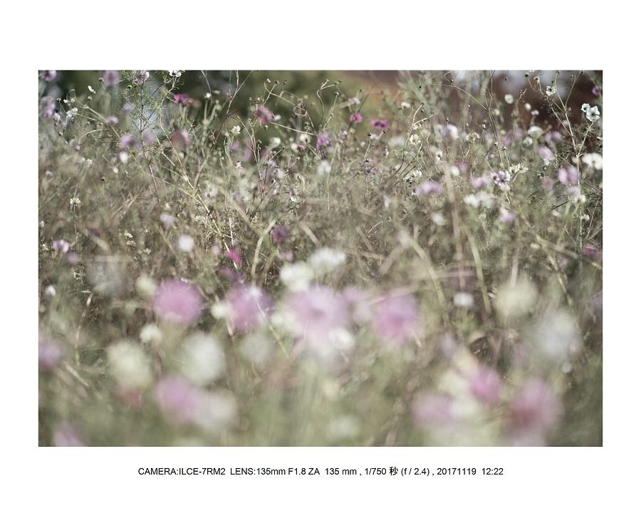 201711大阪長居植物園オールドレンズスナップ(SuperTakumar50mmF1.4)6.jpg