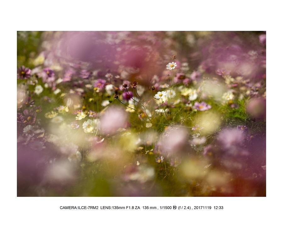 201711大阪長居植物園オールドレンズスナップ(SuperTakumar50mmF1.4)7.jpg