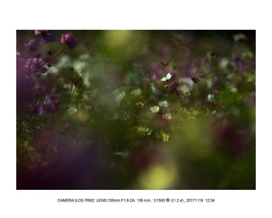 201711大阪長居植物園オールドレンズスナップ(SuperTakumar50mmF1.4)8.jpg