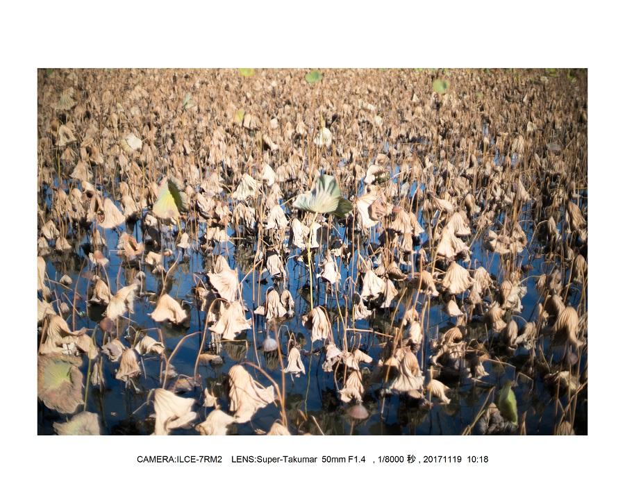 201711大阪長居植物園オールドレンズスナップ(SuperTakumar50mmF1.4)9.jpg