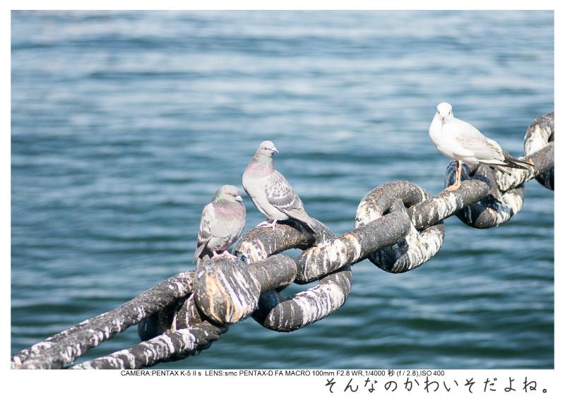 CP+2015_36.jpg