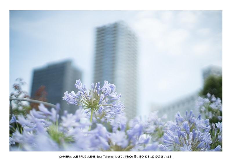 オールドレンズで大阪カメラ散歩(Sper-Takumar 50mm F1.4)7.jpg