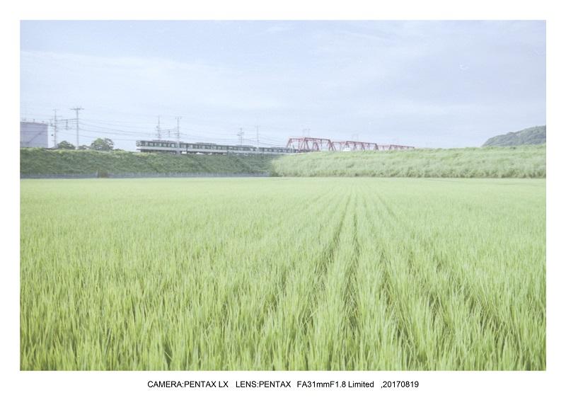 フィルムカメラPENTAX SP&LXで京都散歩(SuperTakumar50mmF1.4&FA31mmF1.8)1.jpg