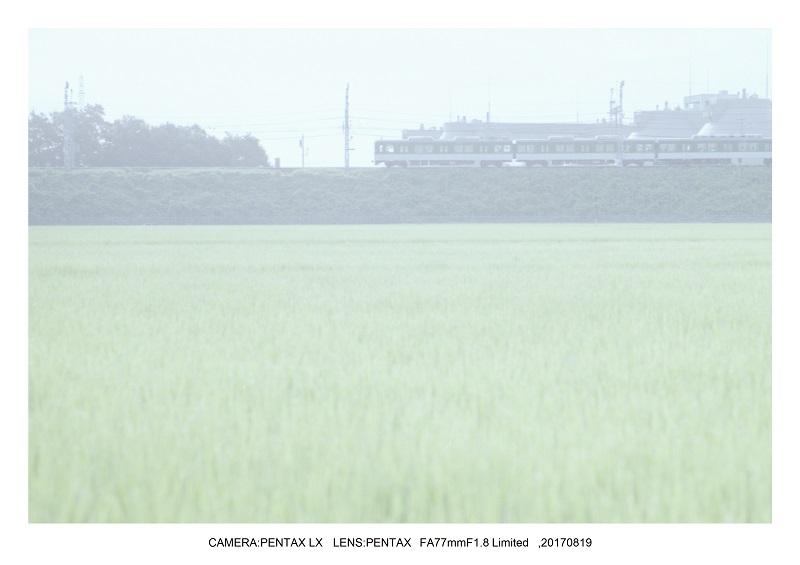 フィルムカメラPENTAX SP&LXで京都散歩(SuperTakumar50mmF1.4&FA31mmF1.8)2.jpg