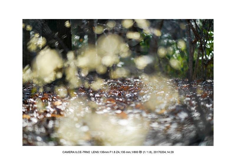 レンズの味を楽しむカメラ散歩長居植物園135mmF1.8ZA-2.jpg