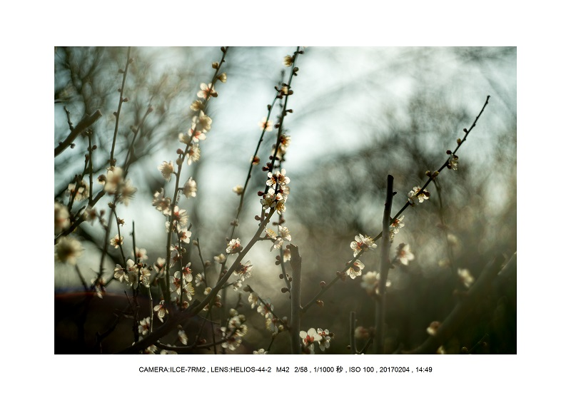 レンズの味を楽しむカメラ散歩長居植物園 Helios-44-2 M42 2 58-10.jpg