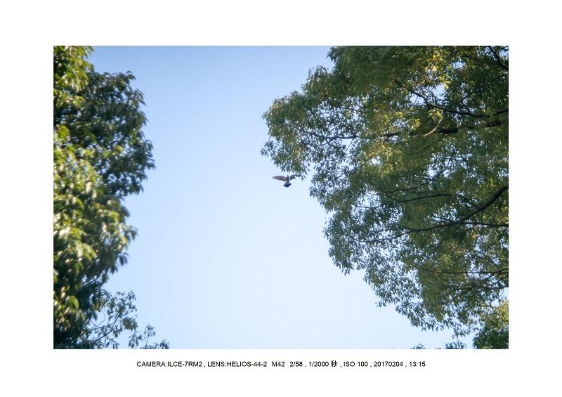 レンズの味を楽しむカメラ散歩長居植物園 Helios-44-2 M42 2 58-3.jpg