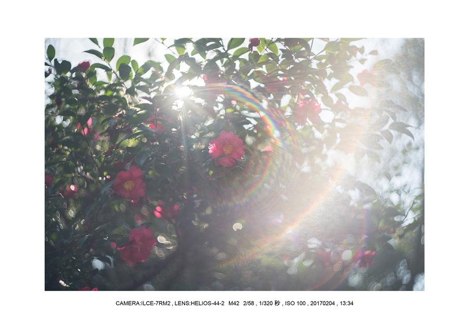 レンズの味を楽しむカメラ散歩長居植物園 Helios-44-2 M42 2 58-4.jpg