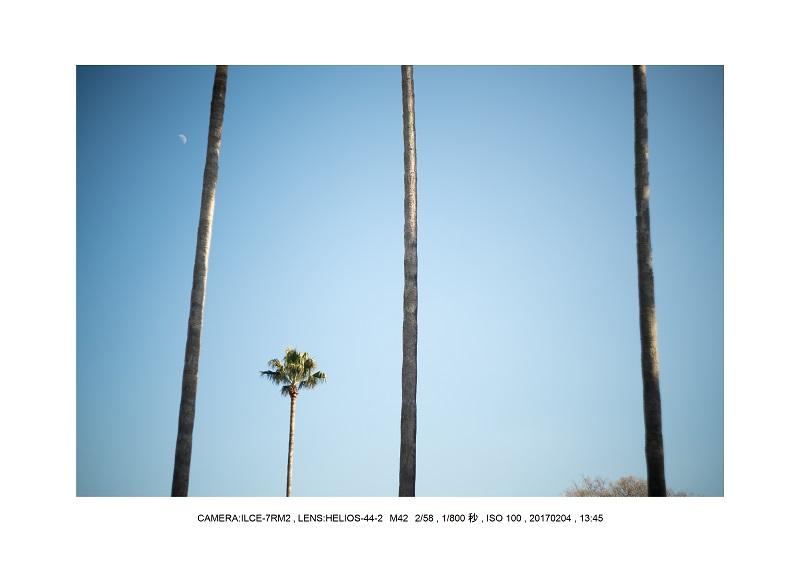 レンズの味を楽しむカメラ散歩長居植物園 Helios-44-2 M42 2 58-6.jpg