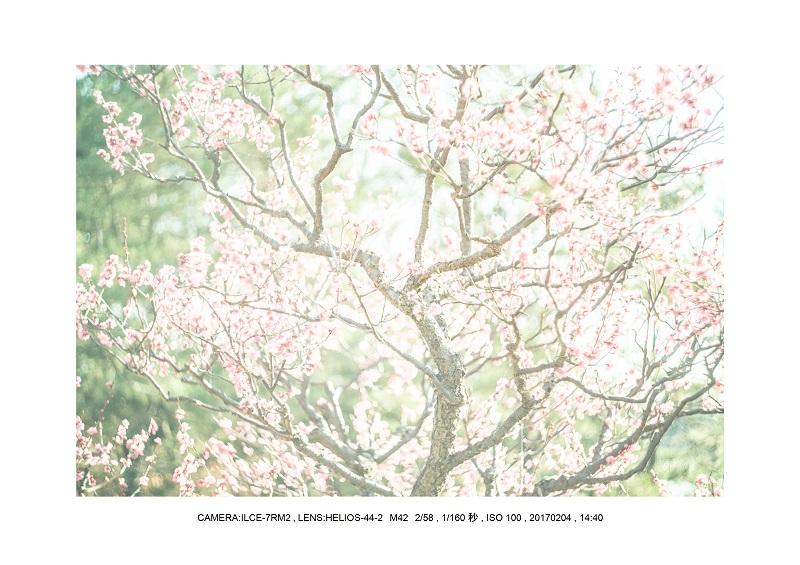 レンズの味を楽しむカメラ散歩長居植物園 Helios-44-2 M42 2 58-7.jpg