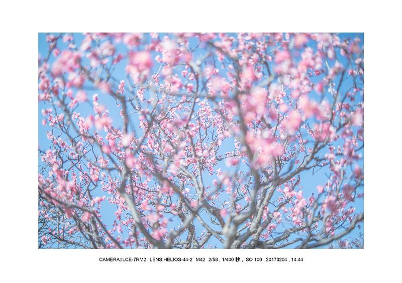 レンズの味を楽しむカメラ散歩長居植物園 Helios-44-2 M42 2 58-9.jpg
