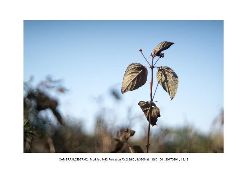 レンズの味を楽しむカメラ散歩長居植物園Modified M42 Pentacon AV 2.8 80.jpg