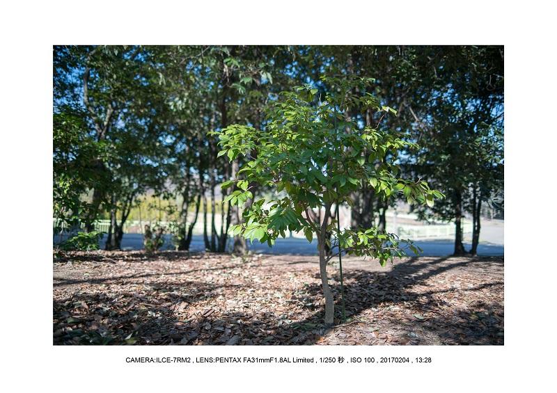 レンズの味を楽しむカメラ散歩長居植物園PENTAX FA31mmF1.8.jpg