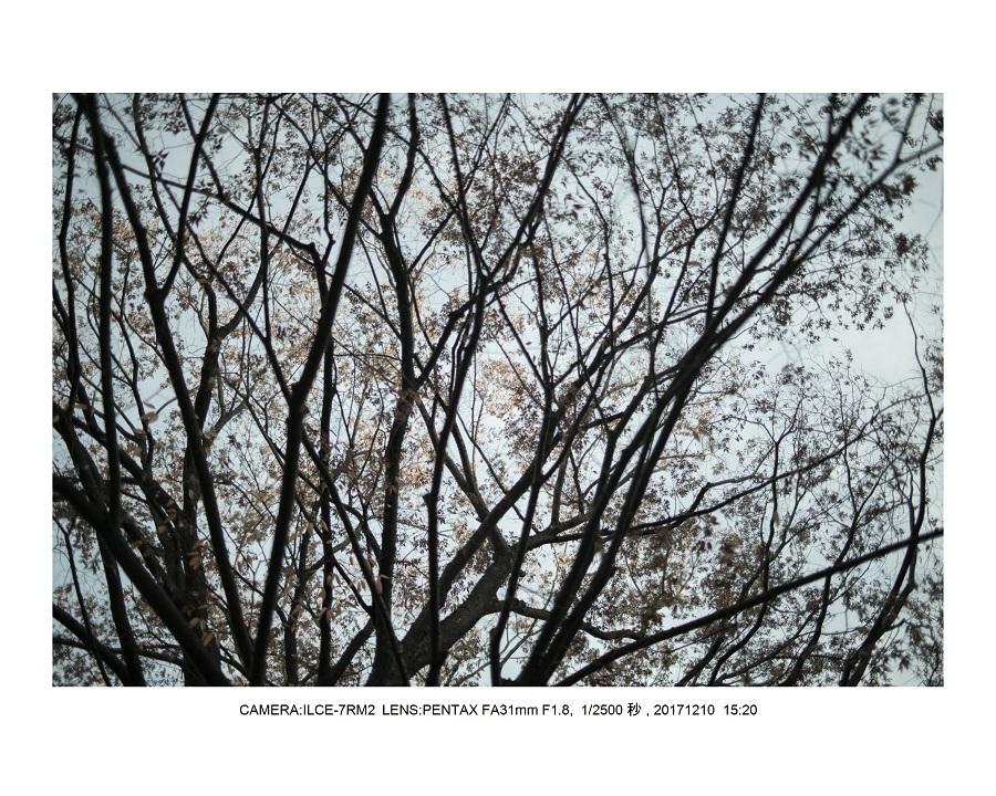 大阪・長居植物園・冬枯れの日8.jpg