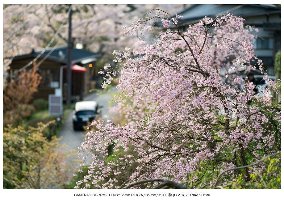 奈良の絶景風景・吉野山の桜見頃満開(下千本・中千本・上千本)旅行記画像18.jpg