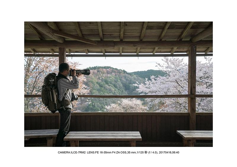奈良の絶景風景・吉野山の桜見頃満開(下千本・中千本・上千本)旅行記画像22.jpg