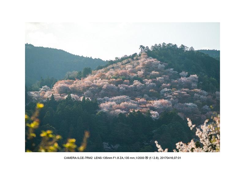 奈良の絶景風景・吉野山の桜見頃満開(下千本・中千本・上千本)旅行記画像28.jpg
