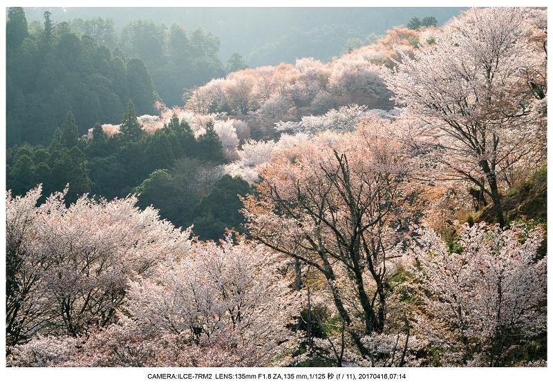 奈良の絶景風景・吉野山の桜見頃満開(下千本・中千本・上千本)旅行記画像34.jpg