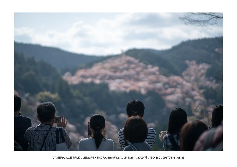 奈良の絶景風景・吉野山の桜見頃満開(下千本・中千本・上千本)旅行記画像43.jpg