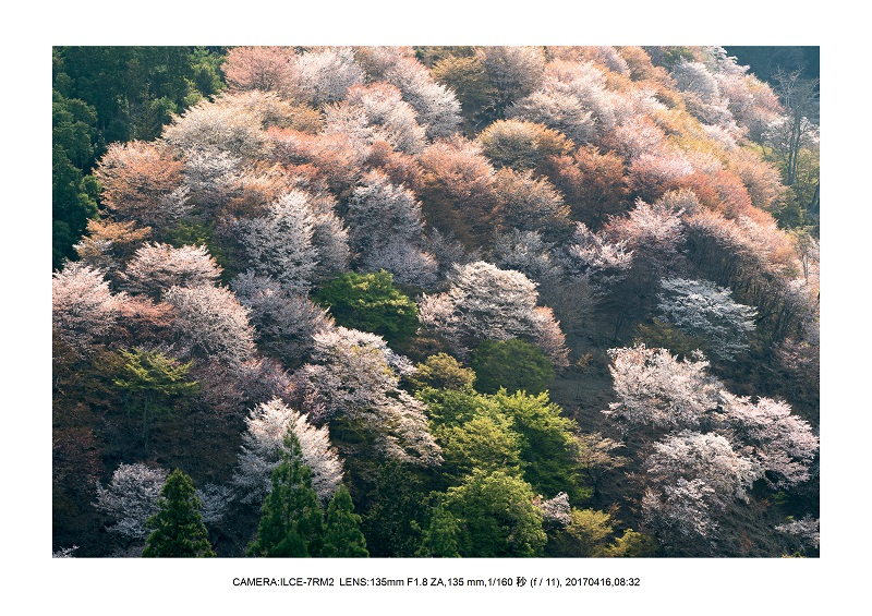 奈良の絶景風景・吉野山の桜見頃満開(下千本・中千本・上千本)旅行記画像51.jpg