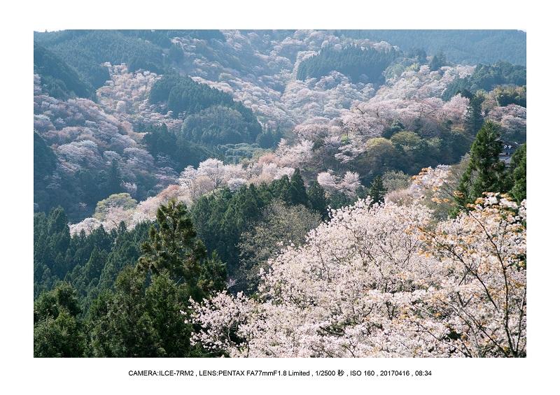 奈良の絶景風景・吉野山の桜見頃満開(下千本・中千本・上千本)旅行記画像52.jpg