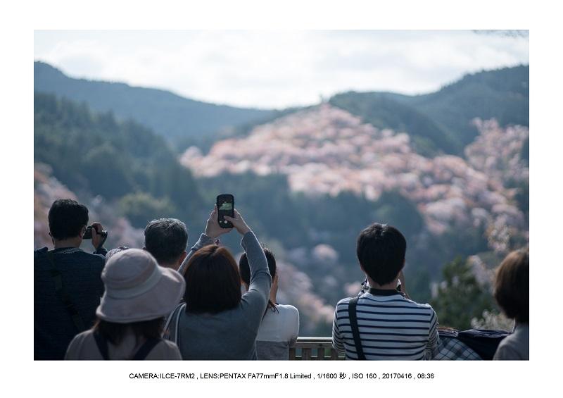 奈良の絶景風景・吉野山の桜見頃満開(下千本・中千本・上千本)旅行記画像55.jpg