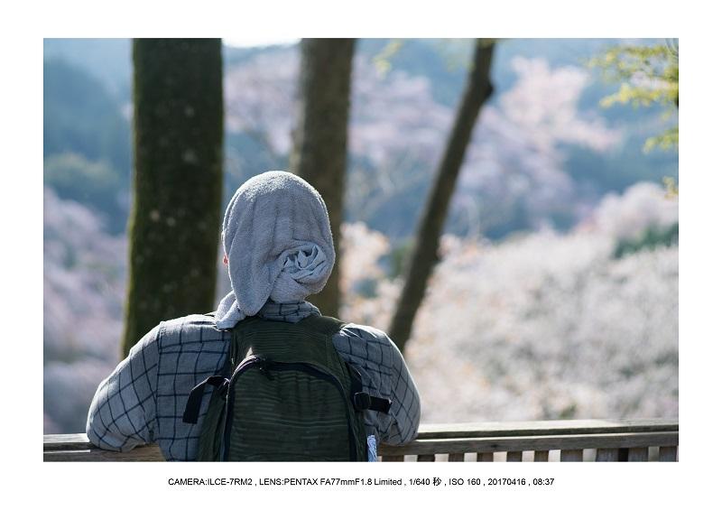 奈良の絶景風景・吉野山の桜見頃満開(下千本・中千本・上千本)旅行記画像57.jpg