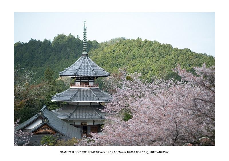 奈良の絶景風景・吉野山の桜見頃満開(下千本・中千本・上千本)旅行記画像64.jpg