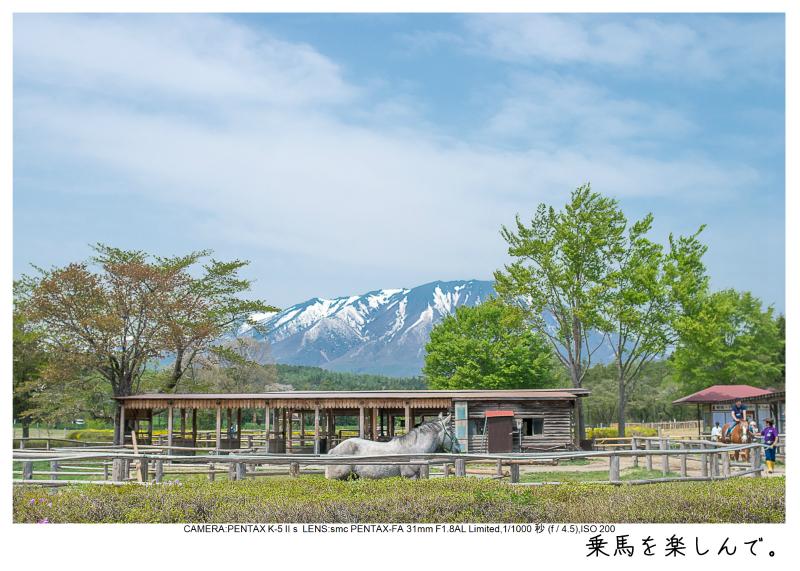 小岩井農場の一本桜19.jpg