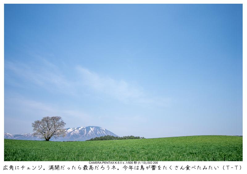 小岩井農場の一本桜4.jpg