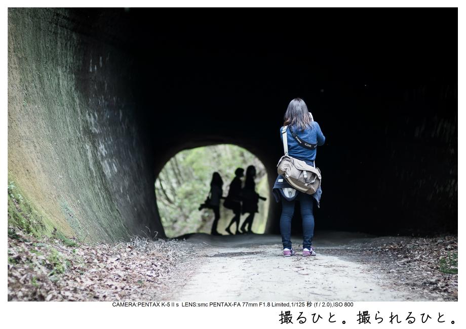 小湊鉄道_菜の花画像12.jpg