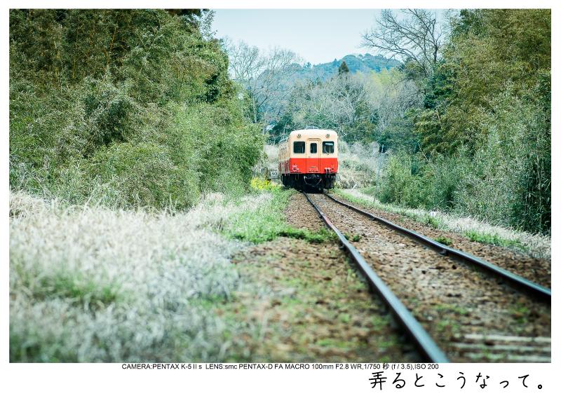 小湊鉄道_菜の花画像16.jpg