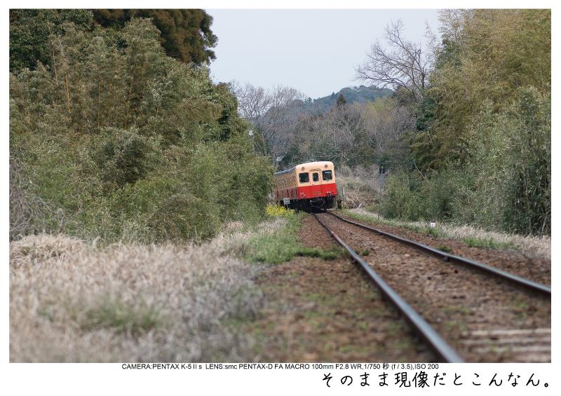 小湊鉄道_菜の花画像17.jpg