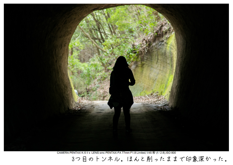 小湊鉄道_菜の花画像20.jpg