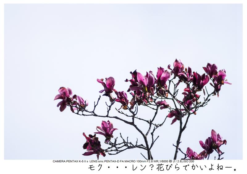 小湊鉄道_菜の花画像22.jpg