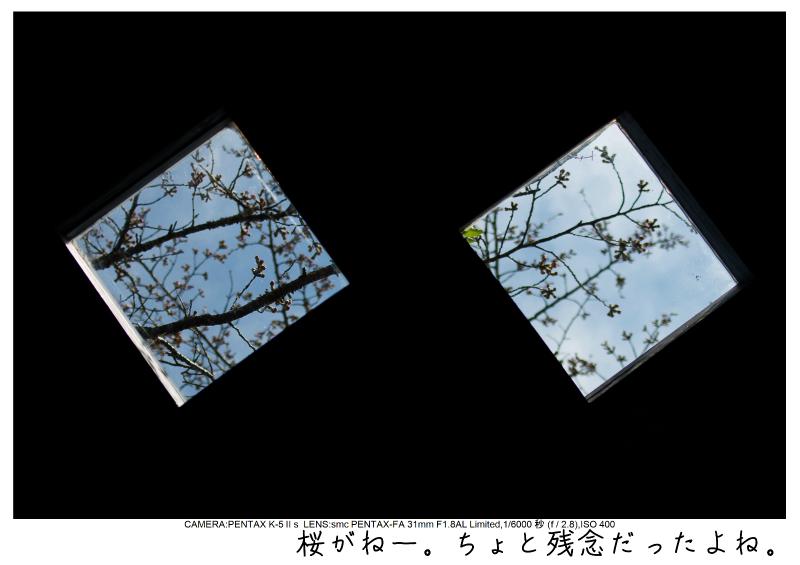 小湊鉄道_菜の花画像24.jpg
