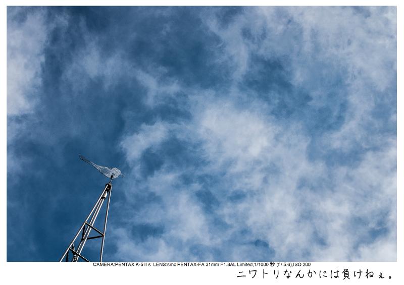 小湊鉄道_菜の花画像25.jpg