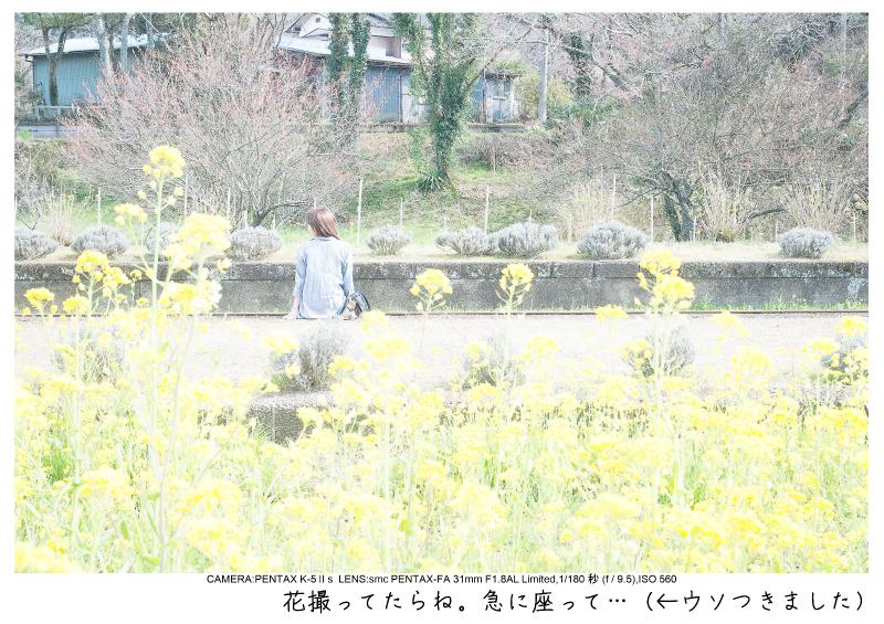 小湊鉄道_菜の花画像26.jpg