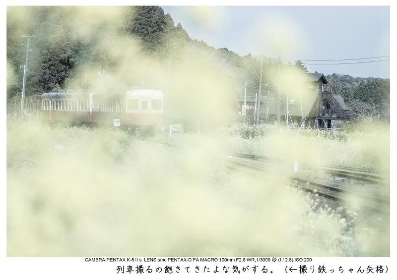 小湊鉄道_菜の花画像27.jpg