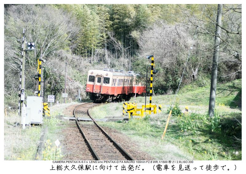 小湊鉄道_菜の花画像30.jpg